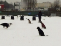2013-02-24_Hu-schule4a.jpg