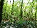 P1000940_A-im-Wald