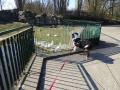 P1040738_Tierpark.jpg