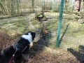 P1040748_Tierpark_Waldhunde.jpg