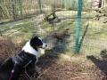 P1040750_Tierpark_Waldhunde.jpg