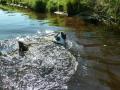 p1090008_schwimmt