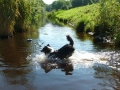 p1090011b_schwimmt
