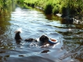 p1090021_schwimmen