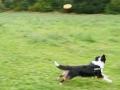 p1090316_frisbee