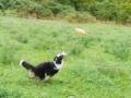 p1090321_frisbee