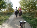 p1090541_pferde